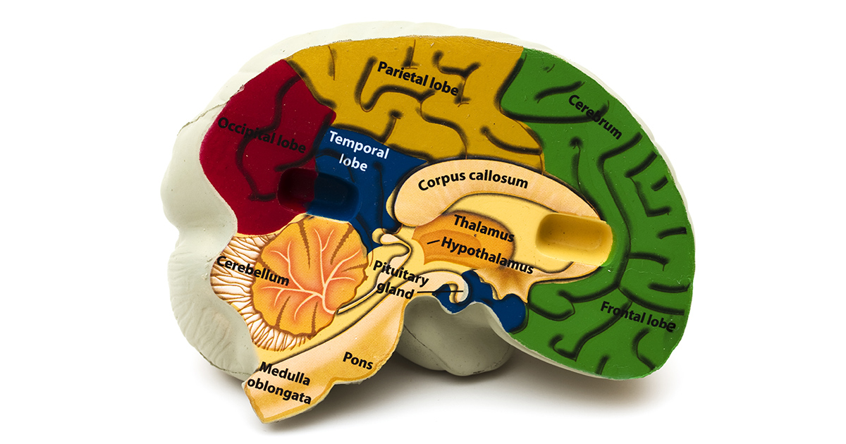 temporal lobectomy